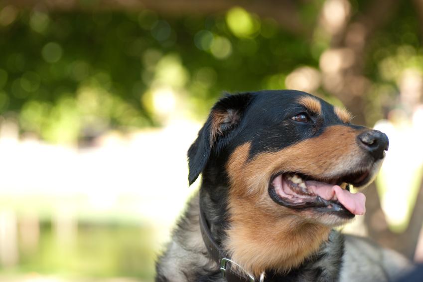 Labrador Mix Welpen Golden Retriever Sch 228 Ferhund